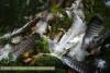 Überreste eines Raubvogels