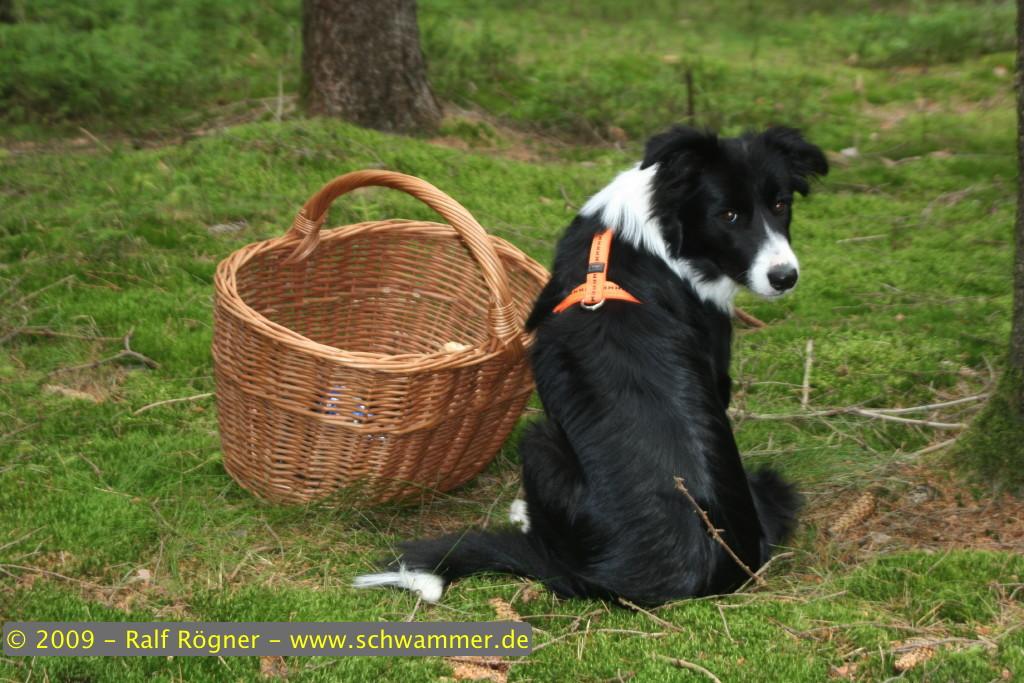 Molly bewacht den Korb
